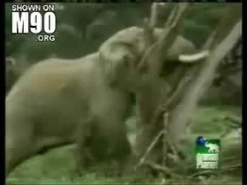 Karthago - Elefánt Dübörgés