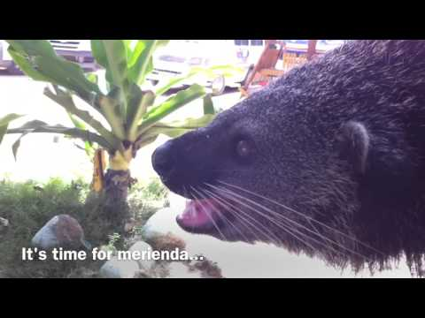 Palawan Bearcat Jill Sabang Beach by HourPhilippines