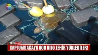 Kaplumbağaya 800 kilo zehir yüklediler!