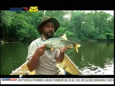 Mancing di Hutan Berau Kalimantan - Mancing Liar (20/3)