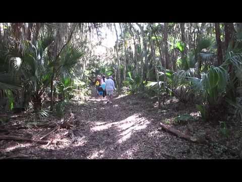 Walk through Florida Enchanted Forest Preserve