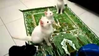 Beautiful cat say Allah hu
