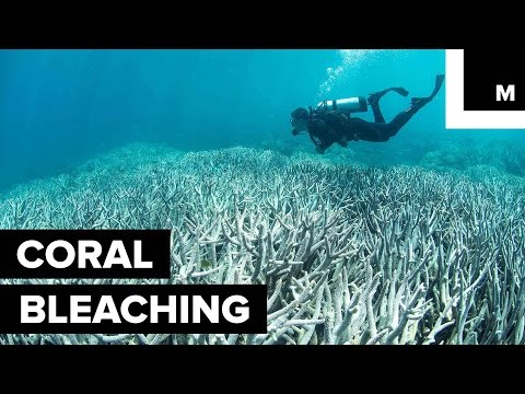 Northern Great Barrier Reef in Midst of Its Worst Bleaching Event on Record