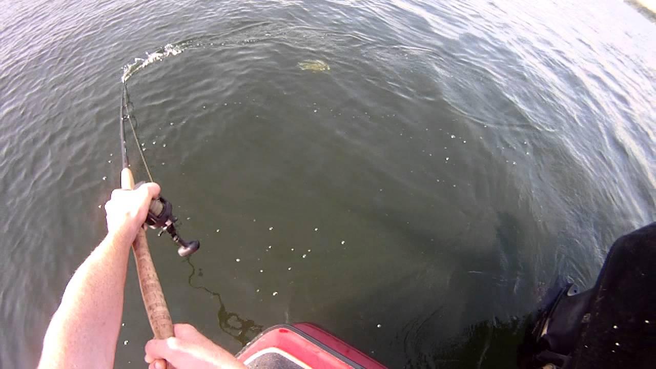 Lake Minnetonka monster muskie follow