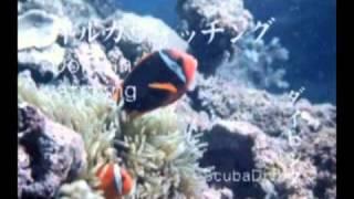 熊本観光PRビデオ 天草編&阿蘇編