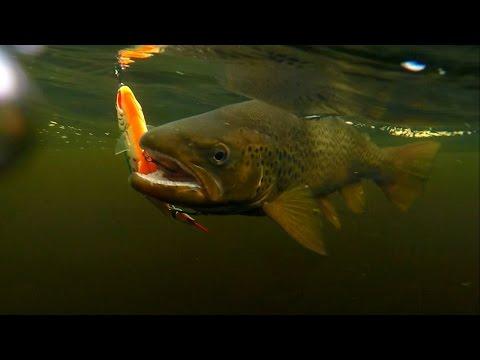 salmonid minnow strike pro