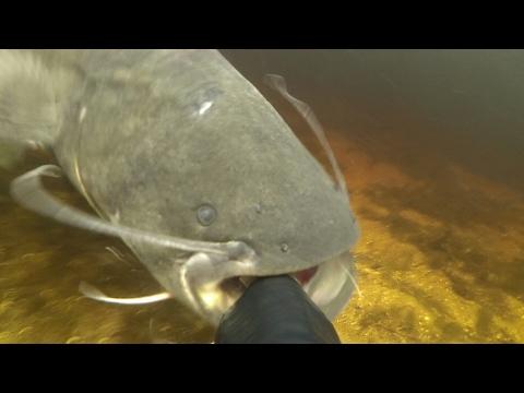 подводная рыбалка в астрахани видео на сома