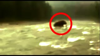 5 Mysterious DINOSAURS/EXTINCT CREATURES  Caught On Camera