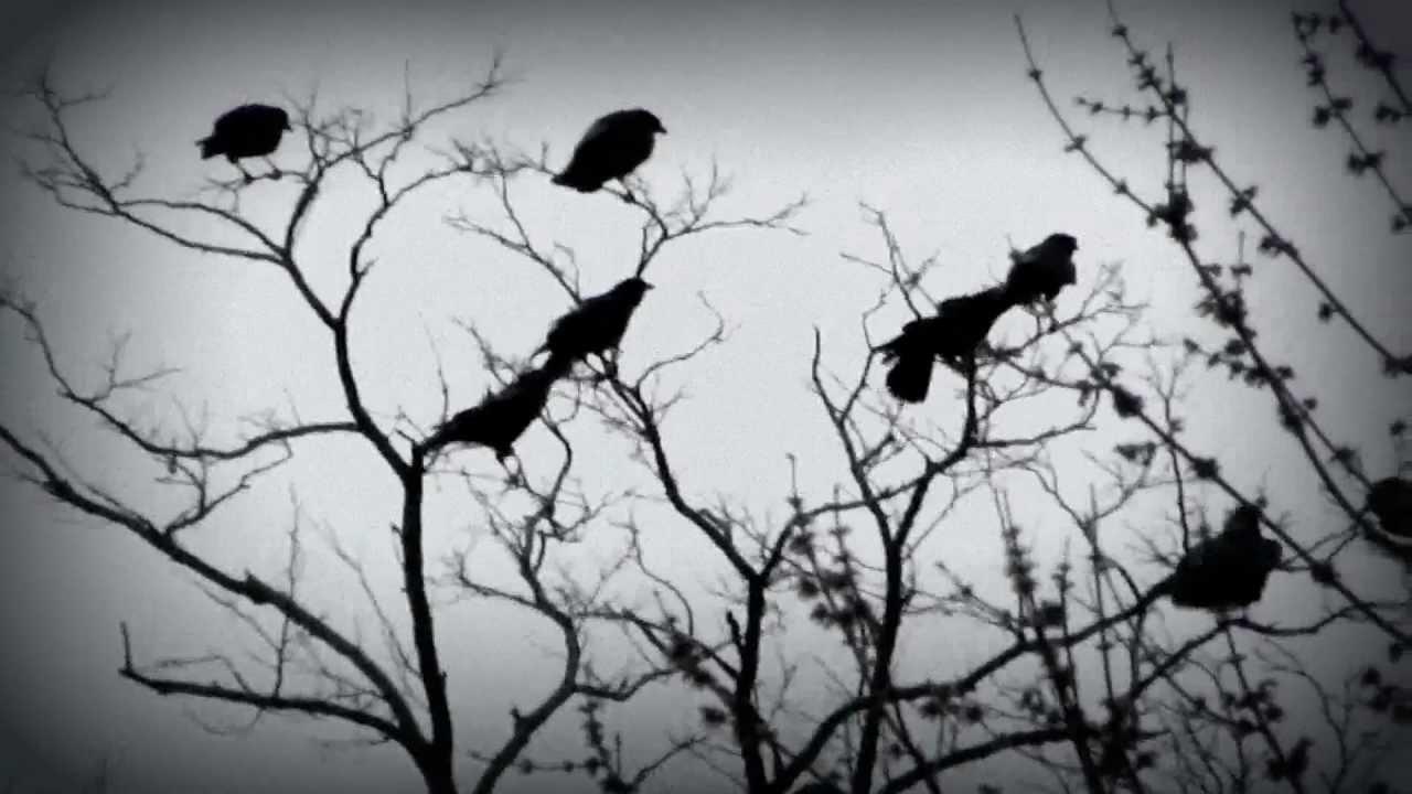 Raven Flock Birds Flock of Ravens