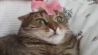 Funny Kooky Cats Video Pet Compilation 2016
