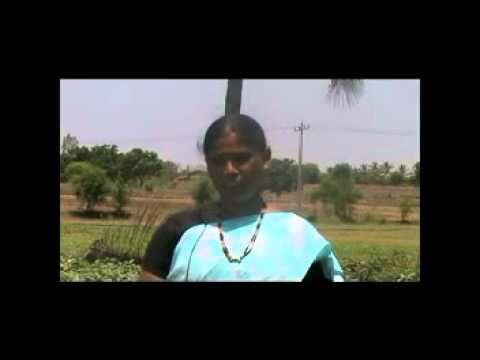 Brinjal cultivation Kannada BAIF Karnataka