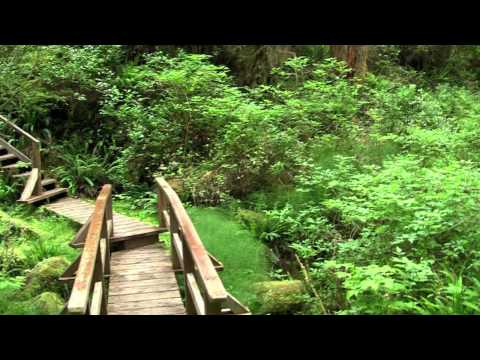 3 Minutes of Heaven (Rainforest at Pacific Rim National Park)