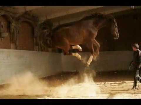 Ładne i Śmieszne Konie