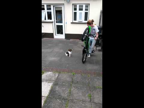 Cute puppy dont like bikes