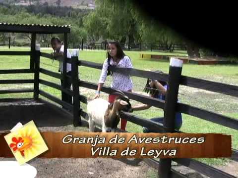 GRANJA DE AVESTRUCES VILLA DE LEYVA