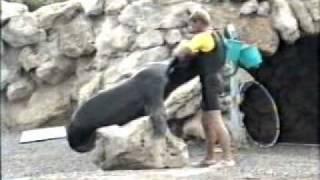 loving sea lions