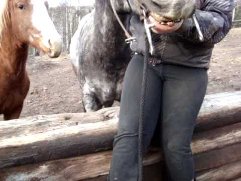 How to Bridle a difficult horse