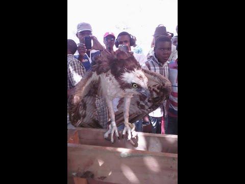 Un aigle en provenance Washington D.C pris en otage dans le Centre D'Haiti