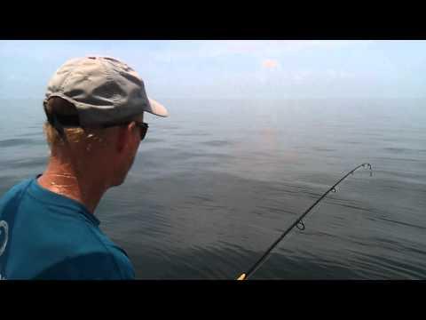 Shark Fishing Biloxi MS