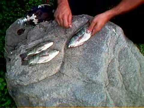 LA PESCA de supervivencia (survival fishing)