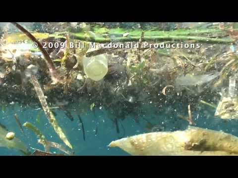 Marine debris: The Pelagic Plastic Plague