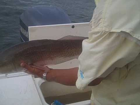 Bradenton Fishing Charters | Sarasota Fishing Charters | Anna Maria | Capt. Brook Wallace