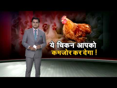 News Express discusses harmful effects of eating chicken, Part 2