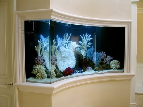 Custom Aquarium Builders