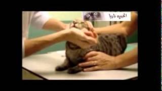 كيفيه اعطاء العلاج للقطط