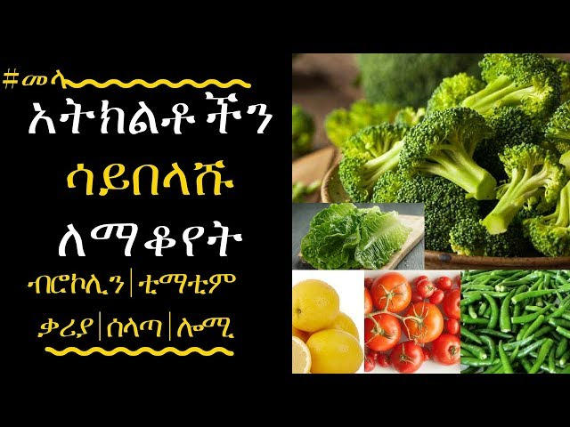 ETHIOPIA -Ways to Keep Your Fruits and Veggies Fresher for Longer