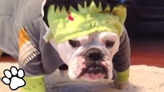 Dogs in Costumes | Funny Dog Compilation | That Pet Life