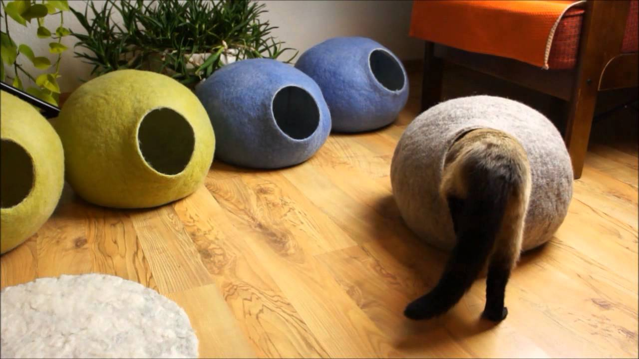 What Is Best Cat Cave Youtube