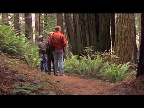 Trillium Falls Trail in Redwood National Park
