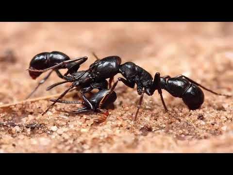 أكبر معجزة أكتشفت في سورة النمل وادهشت العلماء سبحان الله