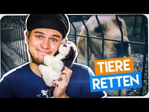 Kalifornien rettet Tiere! - Good News #13
