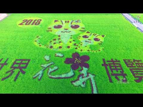 2018 Taichung World Flora Exposition leopard cat colored flower field