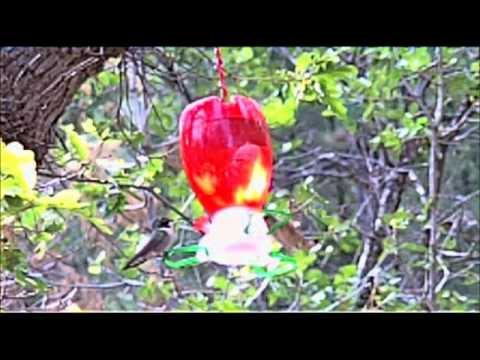 Humming Birds at our campsite at Bonito Hollow RV Park &amp; Campground, New Mexico (SloMo)