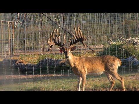 Triple J Ranch | Pasture Bucks From Aggieland | Deer & Wildlife Stories
