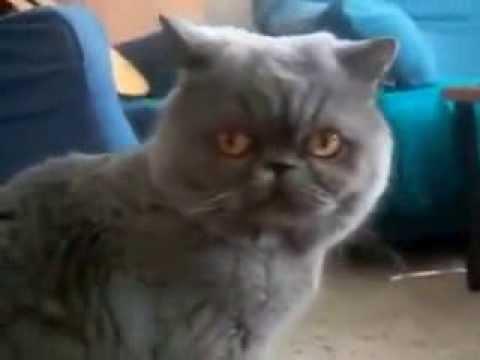 смешной кот 100500 Юмор Прикол Смех