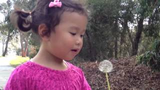 Little blowing dandelion