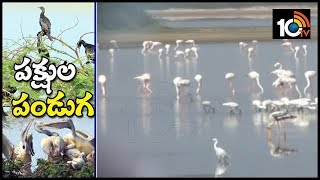 Nellore Flamingo Festival 2019 in Nelapattu | 10Tv News