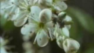 Watch Karine Polwart Rivers Run video