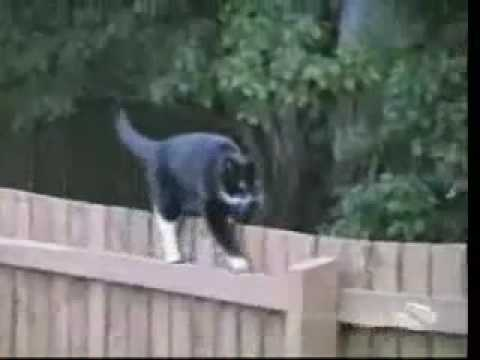 Pisici proaste - mori da ras