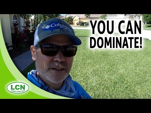 Essential Beginner Lawn Care Tips | You Can Dominate