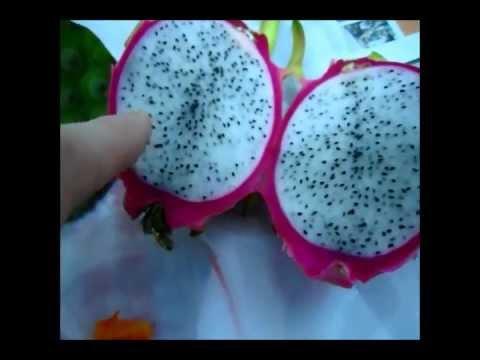 Exotic Asian Fruits
