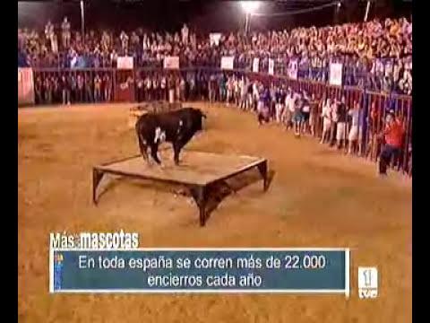 Ratón forja su leyenda de toro asesino