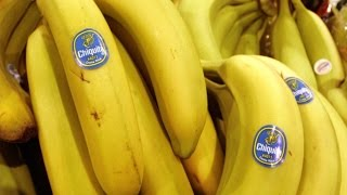 How Chiquita Bananas Are Grown