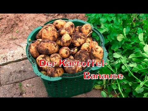 Der Kartoffel Banause (Gärtnern ganz einfach) Film 44