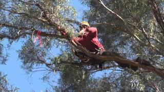 World champion tree climber Josephine Hedger