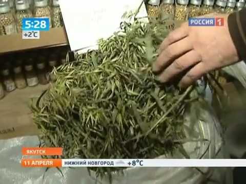 Вечная мерзлота Якутии стала криобанком для растений